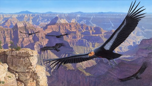 Condors-of-Grand-Canyon