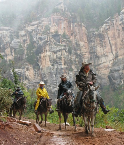 grand-canyon-mule ride