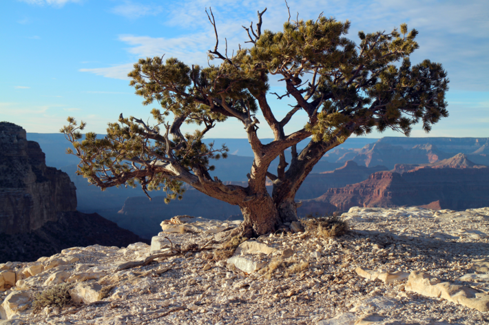 Start Planning Your Child's Summer Camp Adventure at the Grand Canyon Now